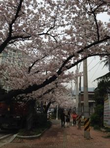 Streets of Jinhae